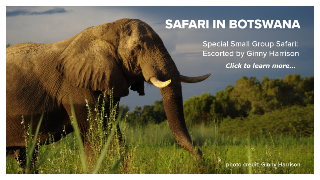 Escorted Botswana Safari